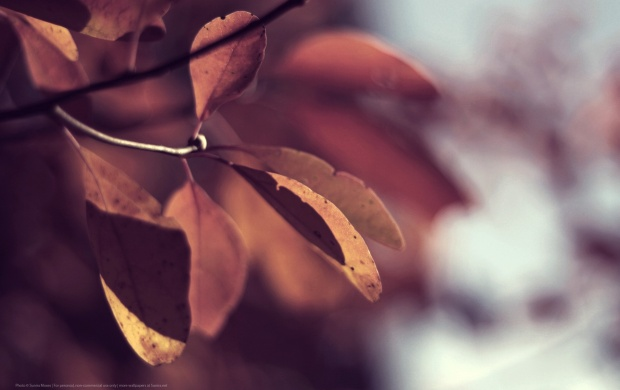 Autumn Leaves Closeup (click to view)
