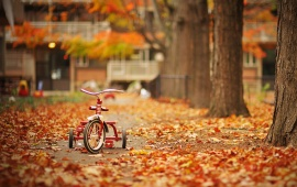 Autumn Leaves In Tricycle