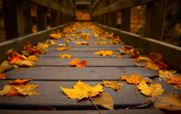 Autumn Leaves on a Bridge (click to view)