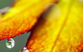 Autumn Leaves On Cute Rain Water Drops