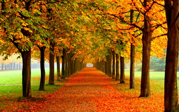 Autumn Leaves On Road (click to view)