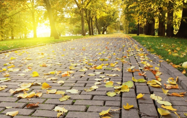Autumn Leaves On The Pavement (click to view)