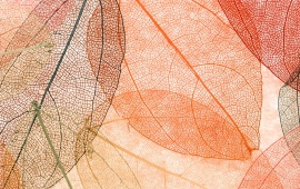 Autumn Leaves Transparent Abstract