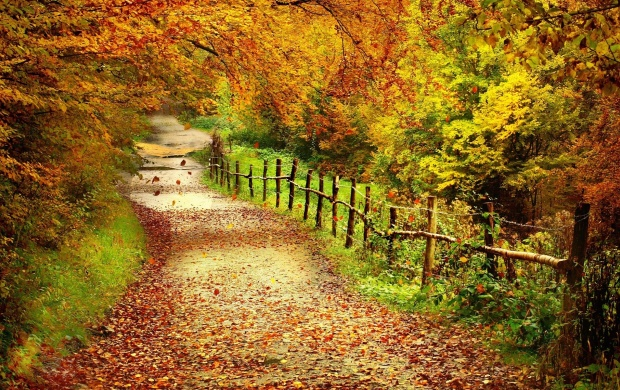 Autumn Path (click to view)