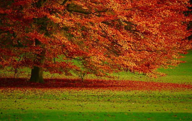 Autumn Tree (click to view)