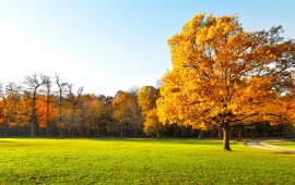 Autumn Tree Garden Landscape