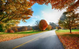 Autumn Tree Road Landscape
