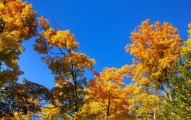 Autumn Trees And Blue Sky