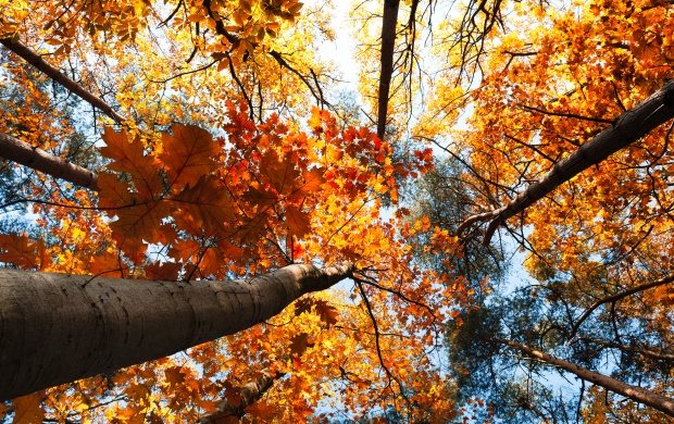 Autumn Trees Leaves (click to view)