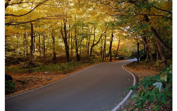 AutumnForest Road (click to view)