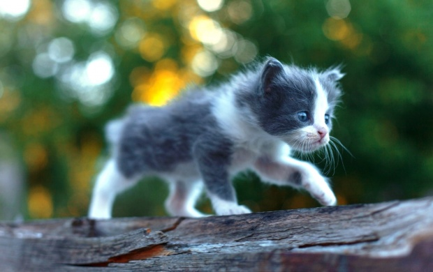Baby Kitten (click to view)
