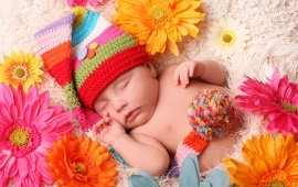 Baby Sleeping Gerbera Flowers
