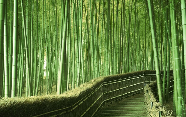 Bamboo Pathway (click to view)