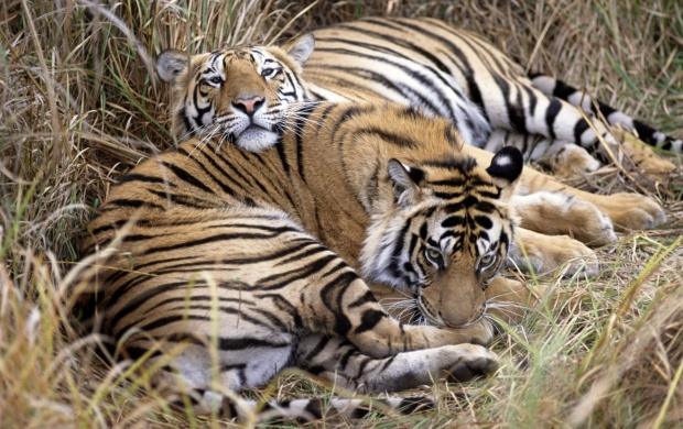 Bandhavgarh national park (click to view)