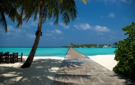 Beach Dock and Palm in Maldives