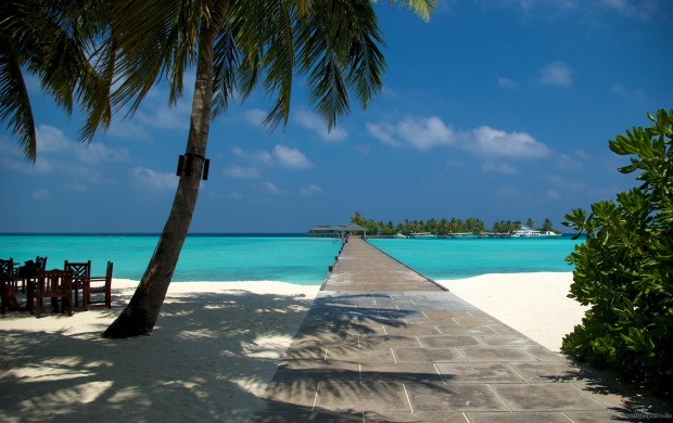 Beach Dock and Palm in Maldives (click to view)