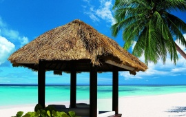 Beach Hut and Palm Tree
