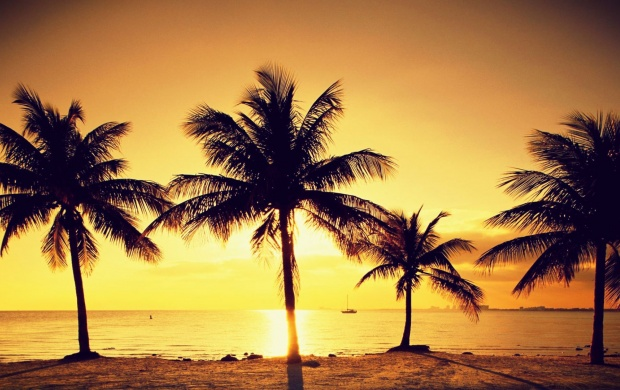 Beach Palms At Sunset (click to view)