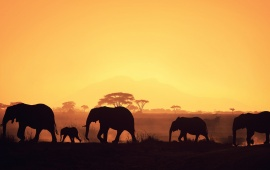 Beautiful African Elephant Group