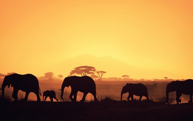 Beautiful African Elephant Group (click to view)
