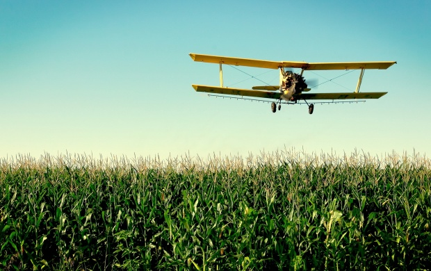 Beautiful Aircraft On Grass (click to view)