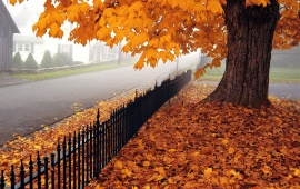 Beautiful Autumn