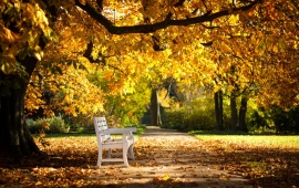 Beautiful Autumn Park And Bench