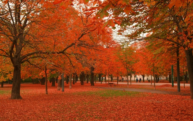 Beautiful Autumn Trees (click to view)