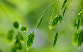 Beautiful Green Water Drops