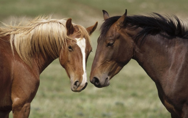 Beautiful Horses (click to view)