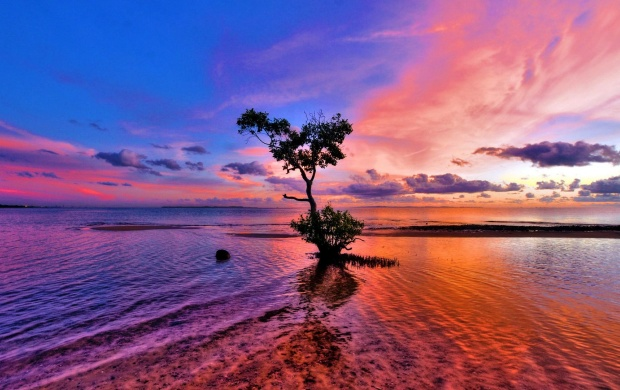 Beautiful Pink Sunset (click to view)