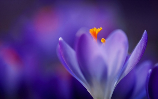 Beautiful Purple Flower (click to view)
