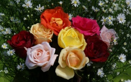 Beautiful Roses