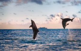 Beautiful Sea Dolphins