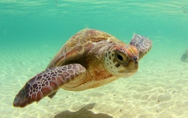 Beautiful Sea Turtle