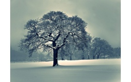 Beautiful Snowed Tree