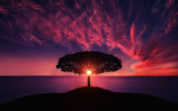 Beautiful Sunset Tree Landscape (click to view)