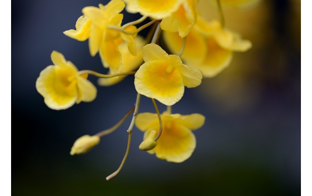 Beautiful yellow flowers wallpapers beautiful yellow flowers click to view mightylinksfo