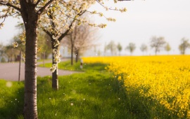 Beautiful Yellow Flowers And Trees