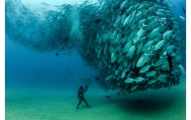 Big Bank Of Fish