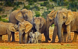 Big Elephant Family