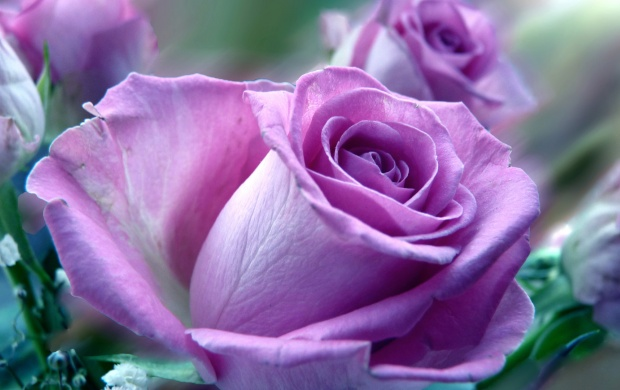 Big Purple Rose (click to view)