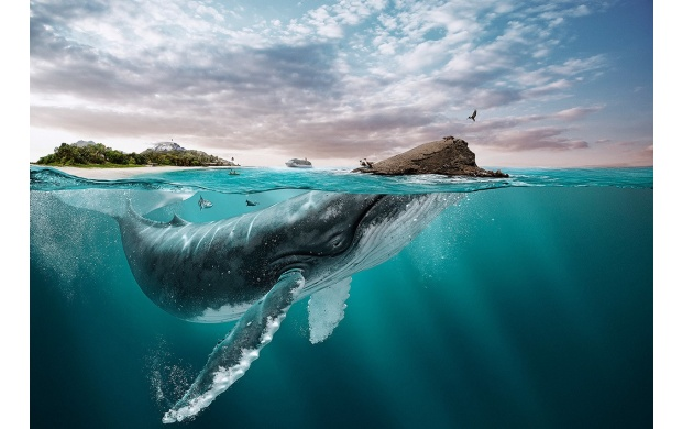 Big Whale Swimming (click to view)