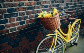Bike Yellow Tulips Flowers