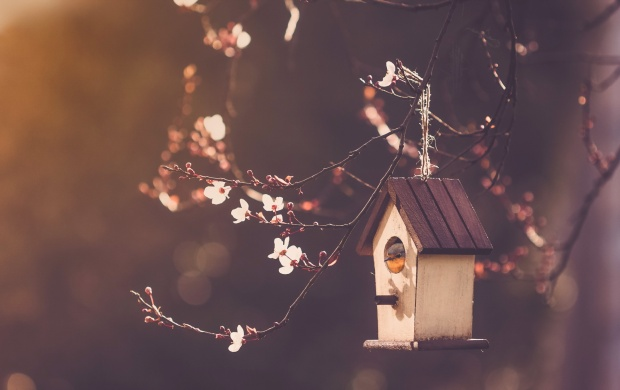 Bird House Nature (click to view)