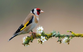 Bird On Flower Branch