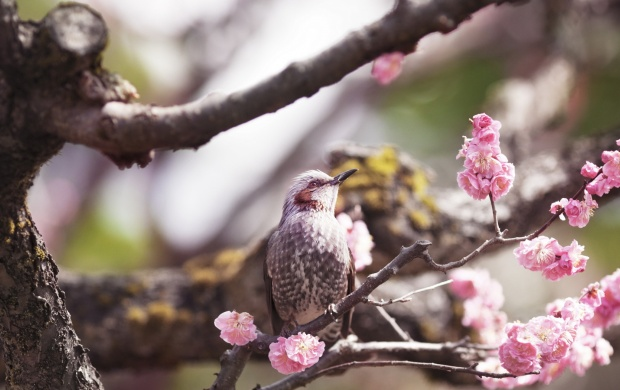 Bird On Spring Tree (click to view)