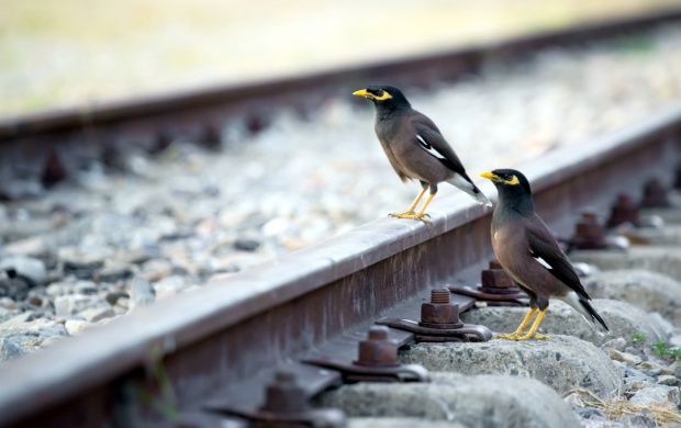 Birds On A Rail Track (click to view)