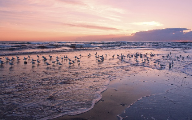 Birds On Sea (click to view)