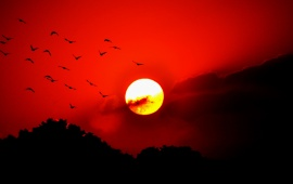 Birds Red Sunset Sky Flying